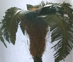 Kurs-Inhalt Botanik in der Krippe: Palmen